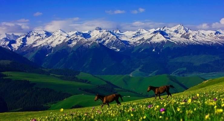 新疆天山の画像 p1_29