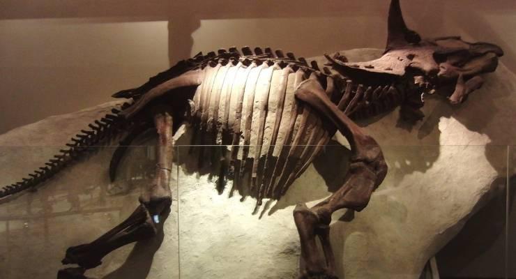 上野 恐竜 博物館