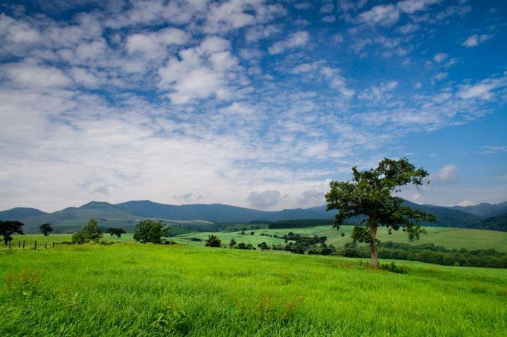 まるでヨーロッパの田園風景!北海道ナイタイ高原牧場が絶景