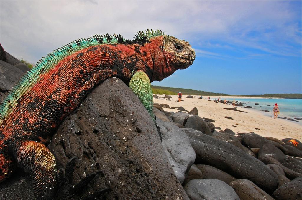 エクアドル人気観光スポットまとめ【アマゾン地方・海岸地方・ガラパゴス諸島】