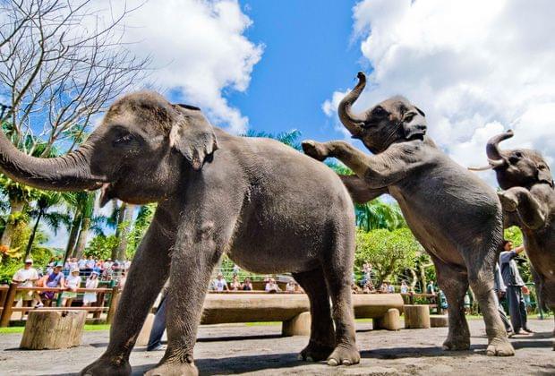 バリ島の動物園やサファリなどでキュートな動物たちと触れ合おう!