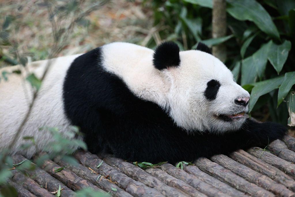 シンガポールの動物園で見れる! 最強レア動物たちに会いたい