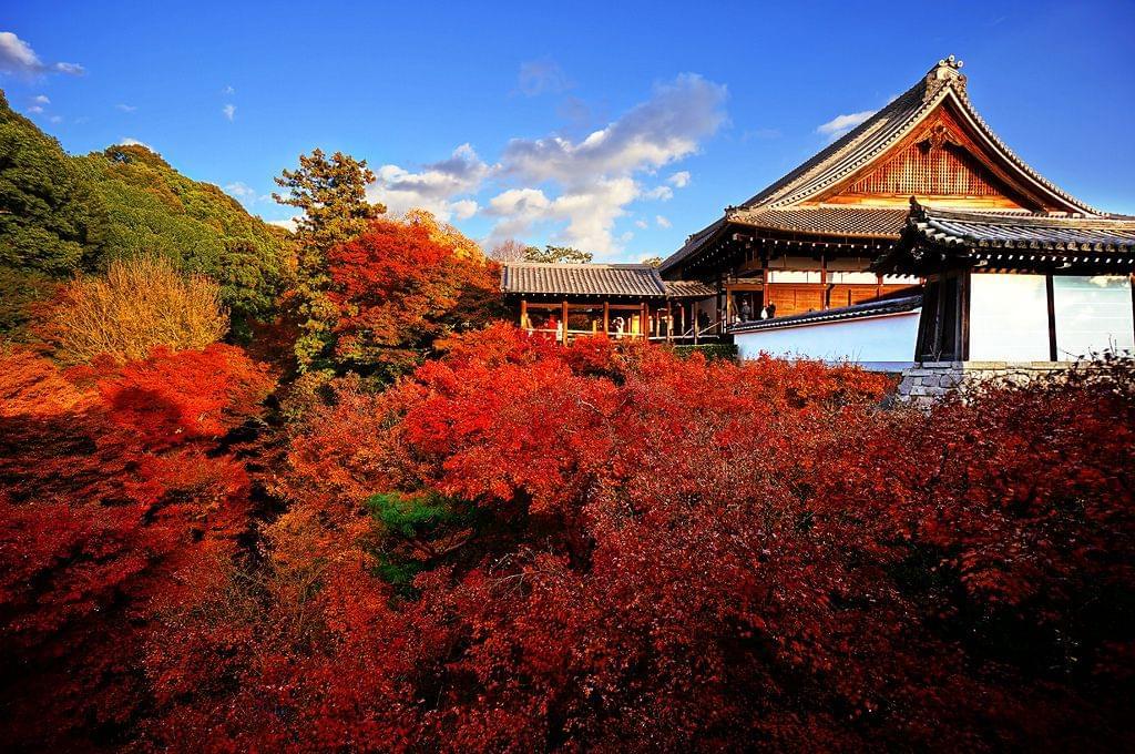 京都駅周辺で行くべき人気観光スポットおすすめ6選!紅葉も桜も最高!