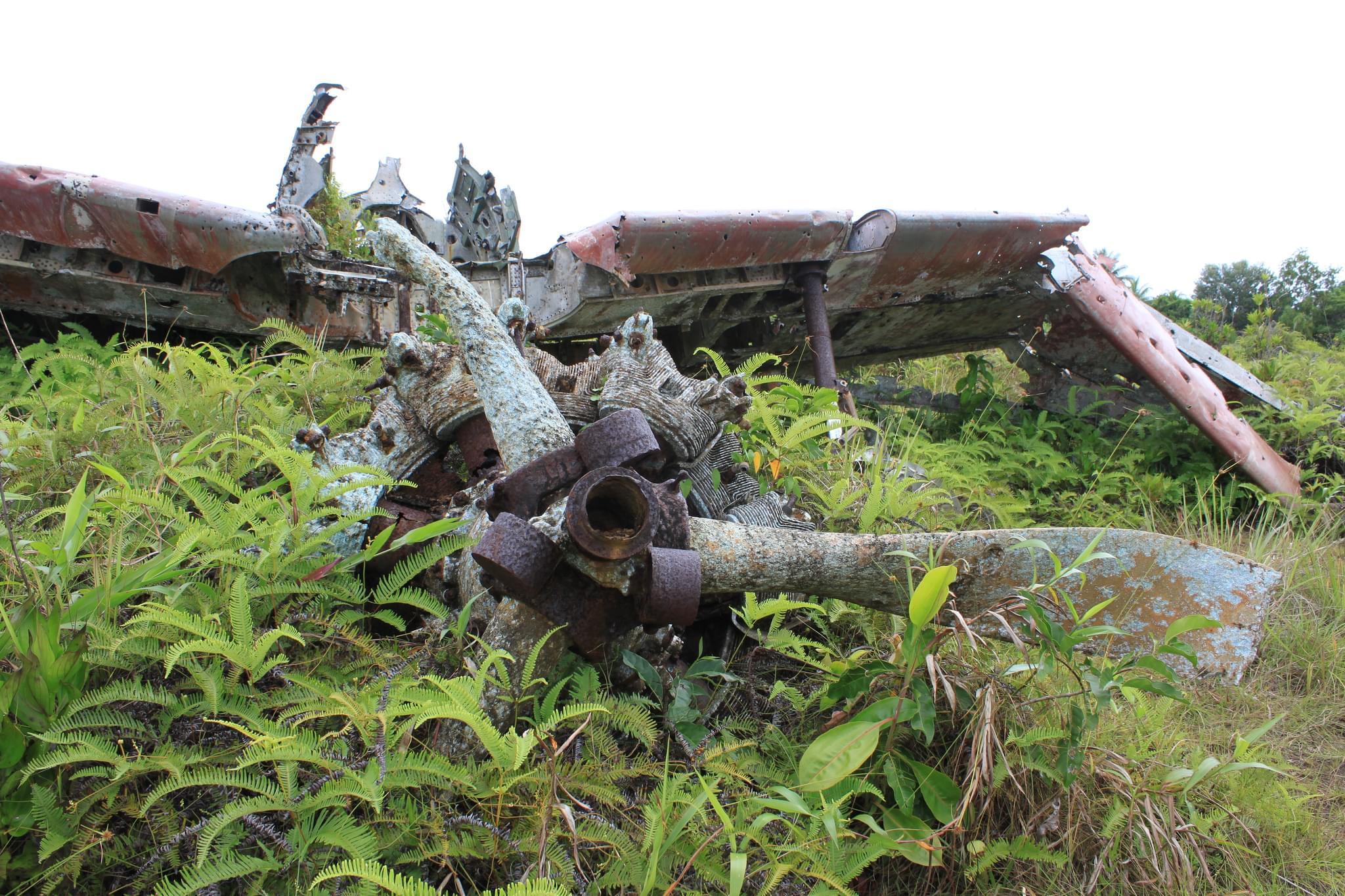 ミクロネシア連邦で行くべき島と観光スポット5選!人気のおすすめレストランも♡