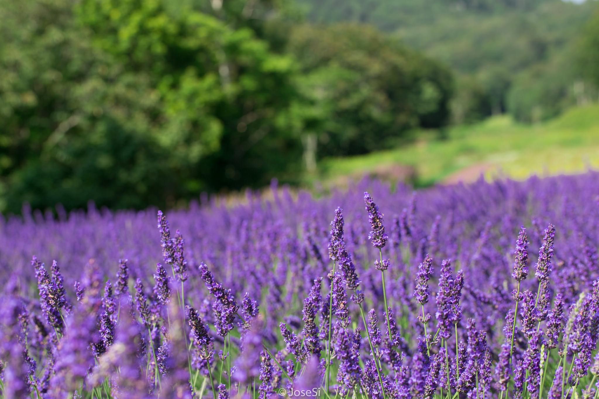 【群馬】花の名所5選!春を存分に楽しめる公園特集