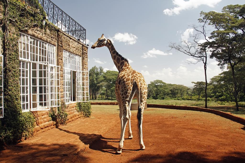 ケニアで人気のサファリ2選!おすすめホテルにケニアグルメも!