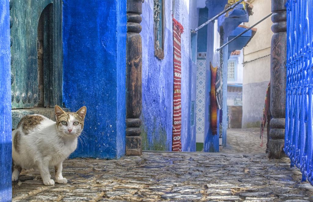 息を吞む青の街!モロッコのシャウエンに行きたい