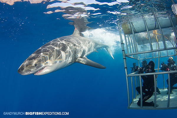 スリル満点すぎでしょ!サメと泳げる世界の7スポット