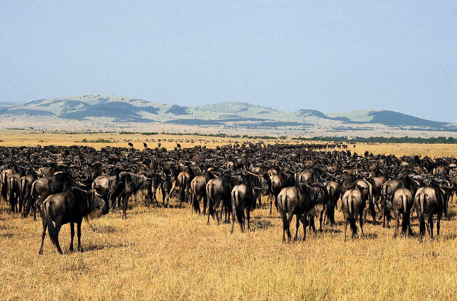 世界観が変わる!動物の躍動をケニア&タンザニアで体感