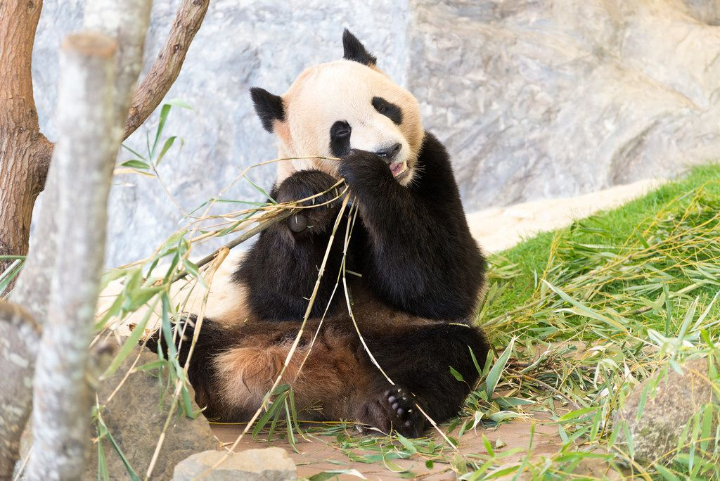 必見!めずらしい動物がいる日本の動物園5選