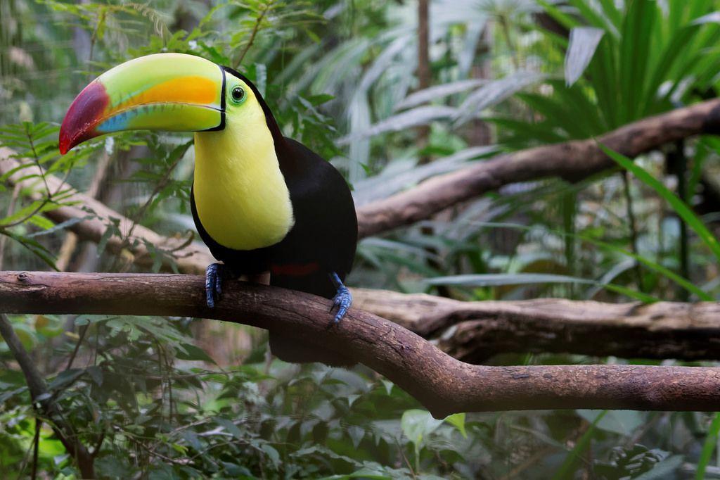 エメラルドグリーンの海と熱帯雨林に潜むマヤ文明!カリブの楽園!ベリーズ