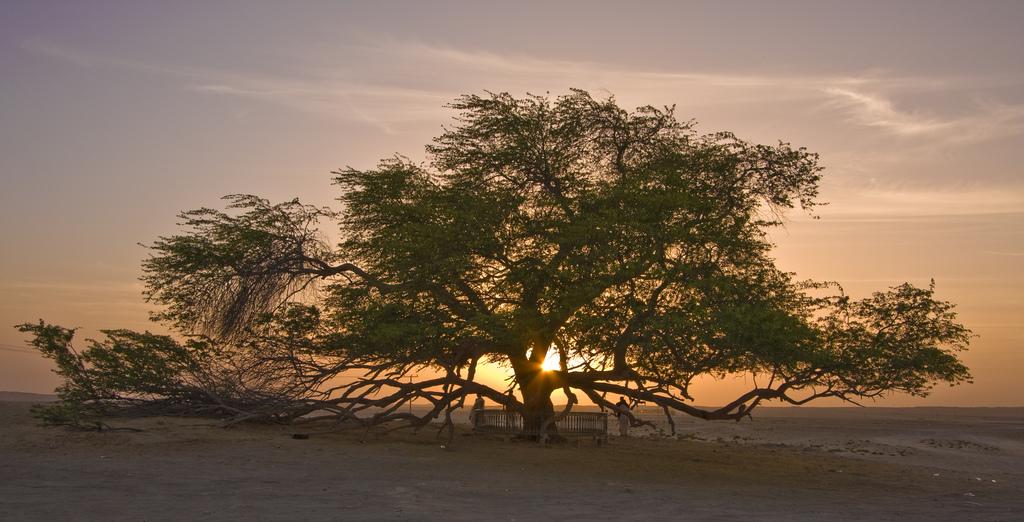中東の島国バーレーンの見どころ7選!世界遺産などの観光名所も豊富なアラブ国家の魅力