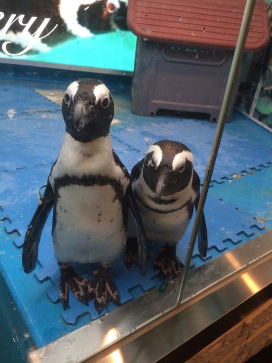 東京・池袋「ペンギンのいるBAR」に行こう!東京唯一の場所で癒しのディナー&バータイムを楽しんじゃお