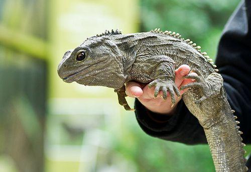 ニュージーランド観光で野生動物を見たい!有名アニマルをご紹介!