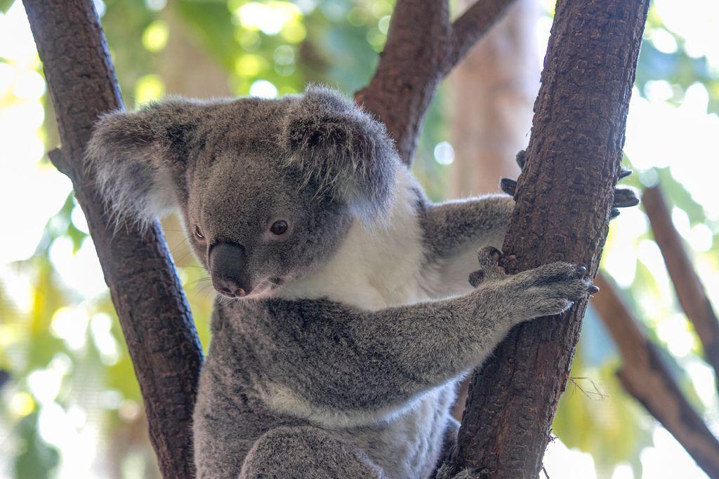 オーストラリアのケアンズってどんなところ?のんびり散策スポット7選