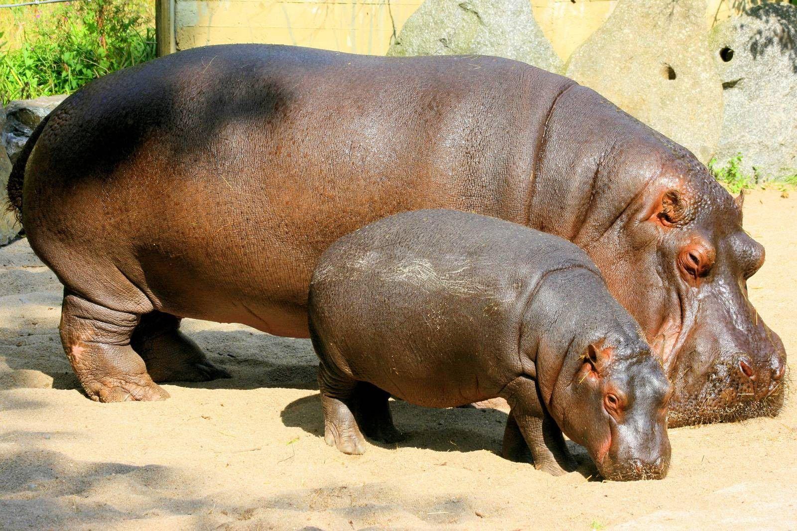 南アフリカのサファリで出会える動物ガイド【草食動物編①】