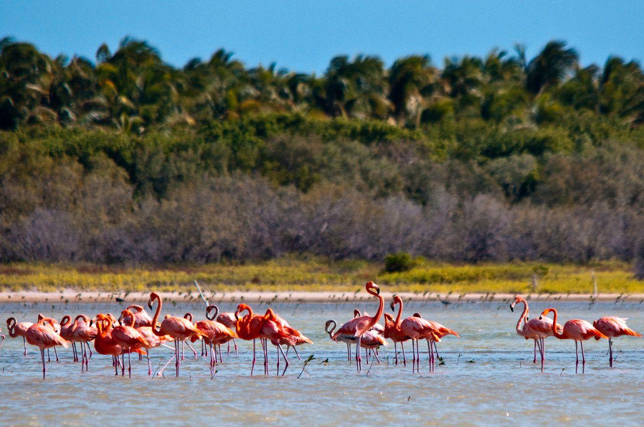 ドミニカ共和国のエコツーリズム徹底ガイド!ただいま人気急上昇の自然満喫アクティビティ