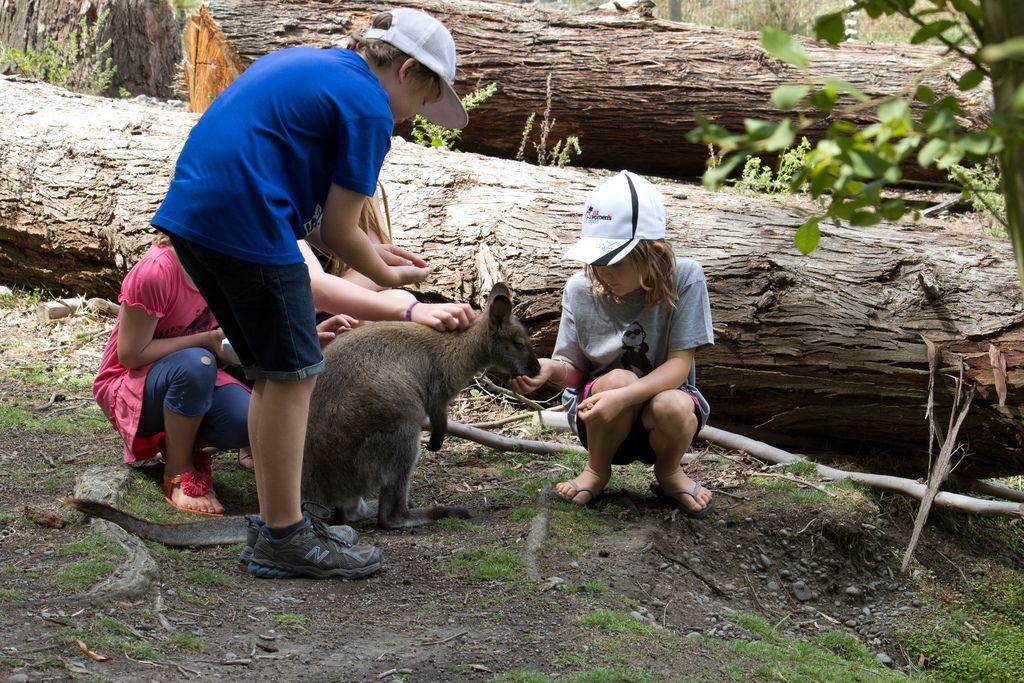 ニュージーランド・クライストチャーチおすすめ観光スポット4選!博物館・美術館・動物園など
