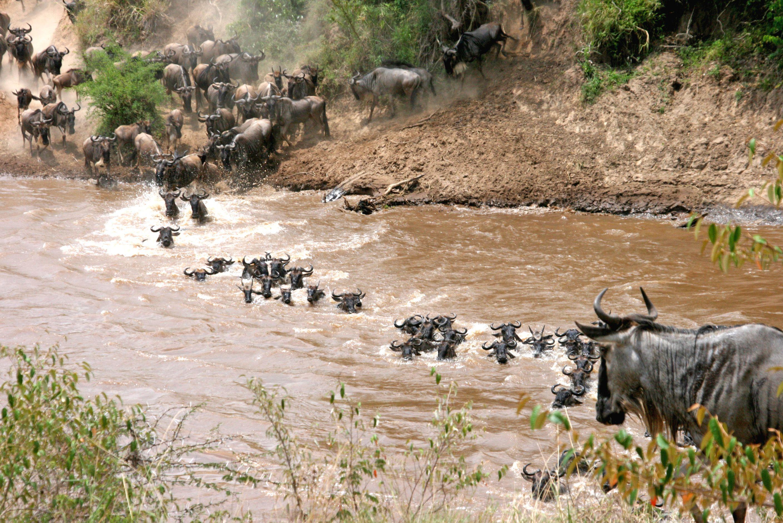 南アフリカ・サファリで出会える動物ガイド!草食動物編②知ってるだけで10倍楽しいサファリ観光