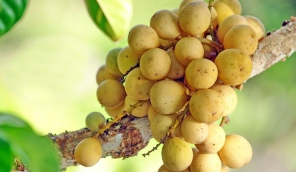 果物大好きな方必見!マレーシアの果物
