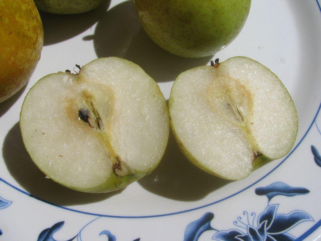 関東の梨狩り農園おすすめ6選!秋の味覚の王様を満喫しよう♪