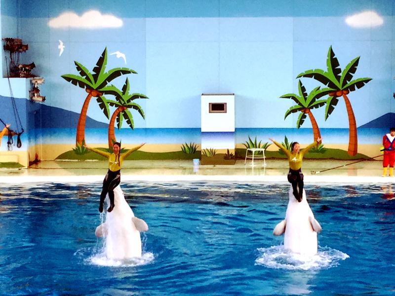 イルカに触れる横浜・八景島シーパラダイスはドルフィン天国だった!