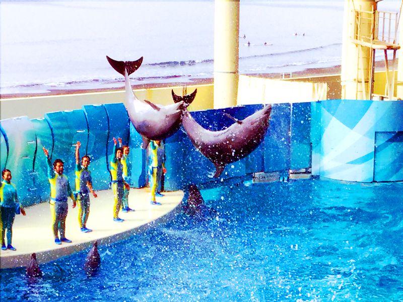 新江ノ島水族館で人気の見どころ5選!子連れ週末旅行におすすめ!
