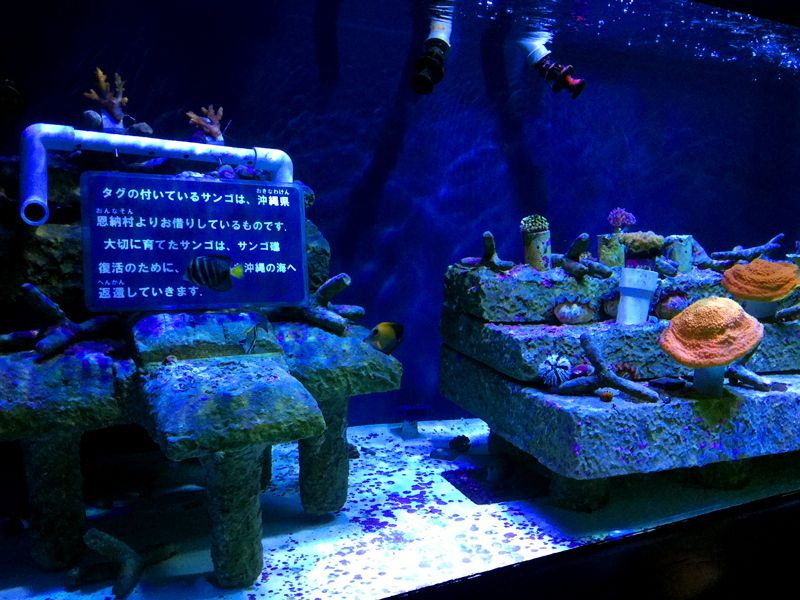 デートにおすすめ!池袋・サンシャイン水族館で出会える美しいお魚たち