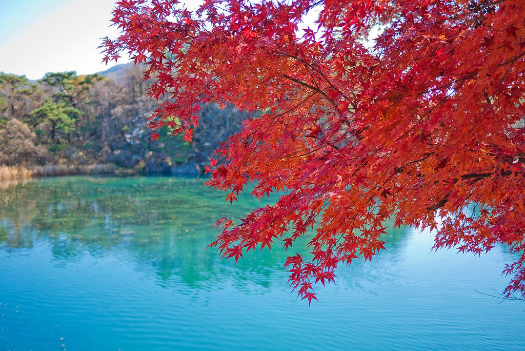 福島で人気のパワースポット「五色沼」が絶景!ハートの鯉も!