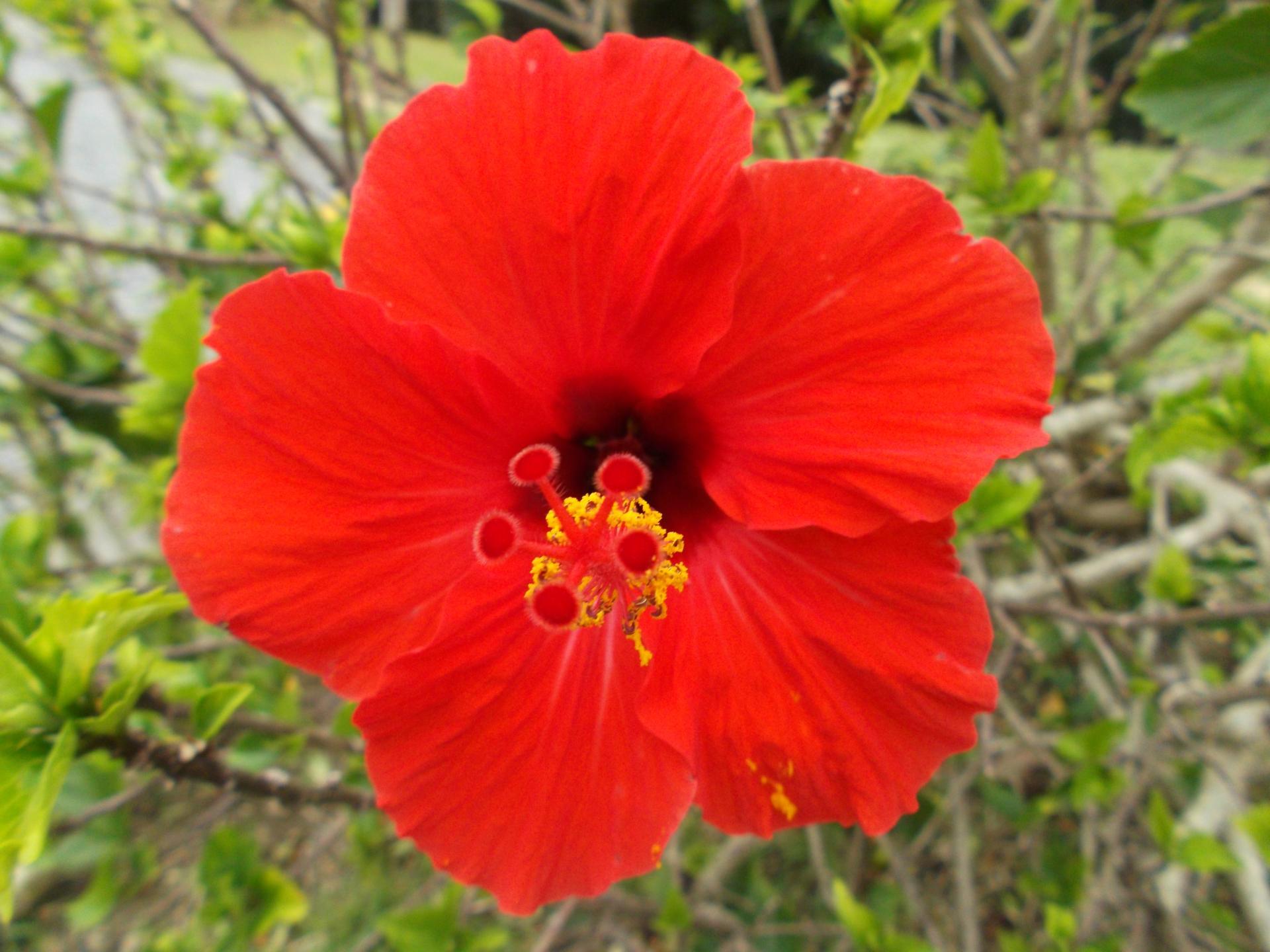 沖縄・那覇市の定番観光スポット3選!沖縄の魅力を独り占めしよう