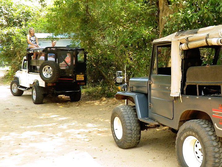 スリランカのゾウの楽園「ミンネリア国立公園」で野生のゾウに会おう!