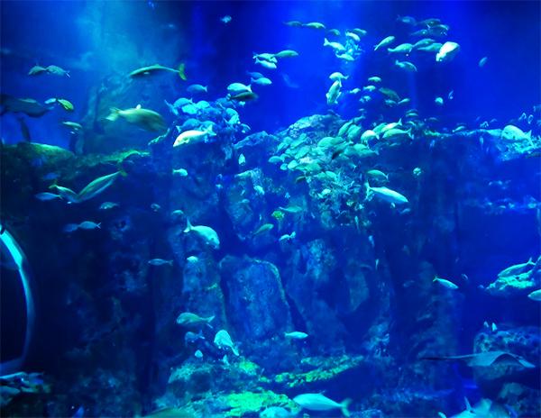 【秋田県・男鹿水族館】キュートなアザラシがお出迎え!水槽はまるごと男鹿の海!