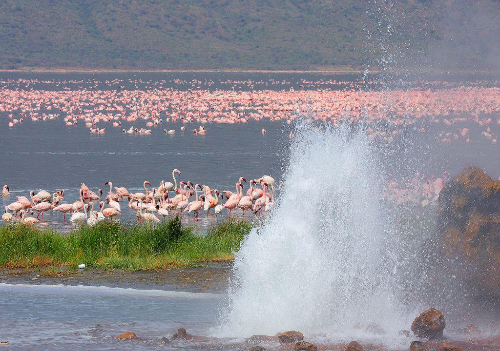 フラミンゴの楽園、ケニア・ボゴリア湖はあたり一面ピンクの世界!