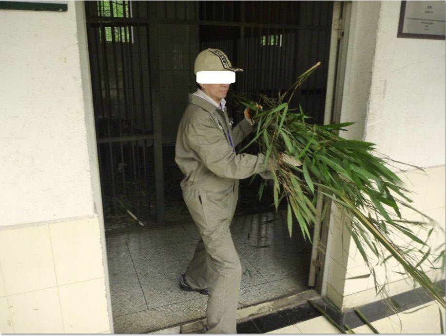 中国・四川省雅安市でパンダ飼育ボランティアを体験できる旅!