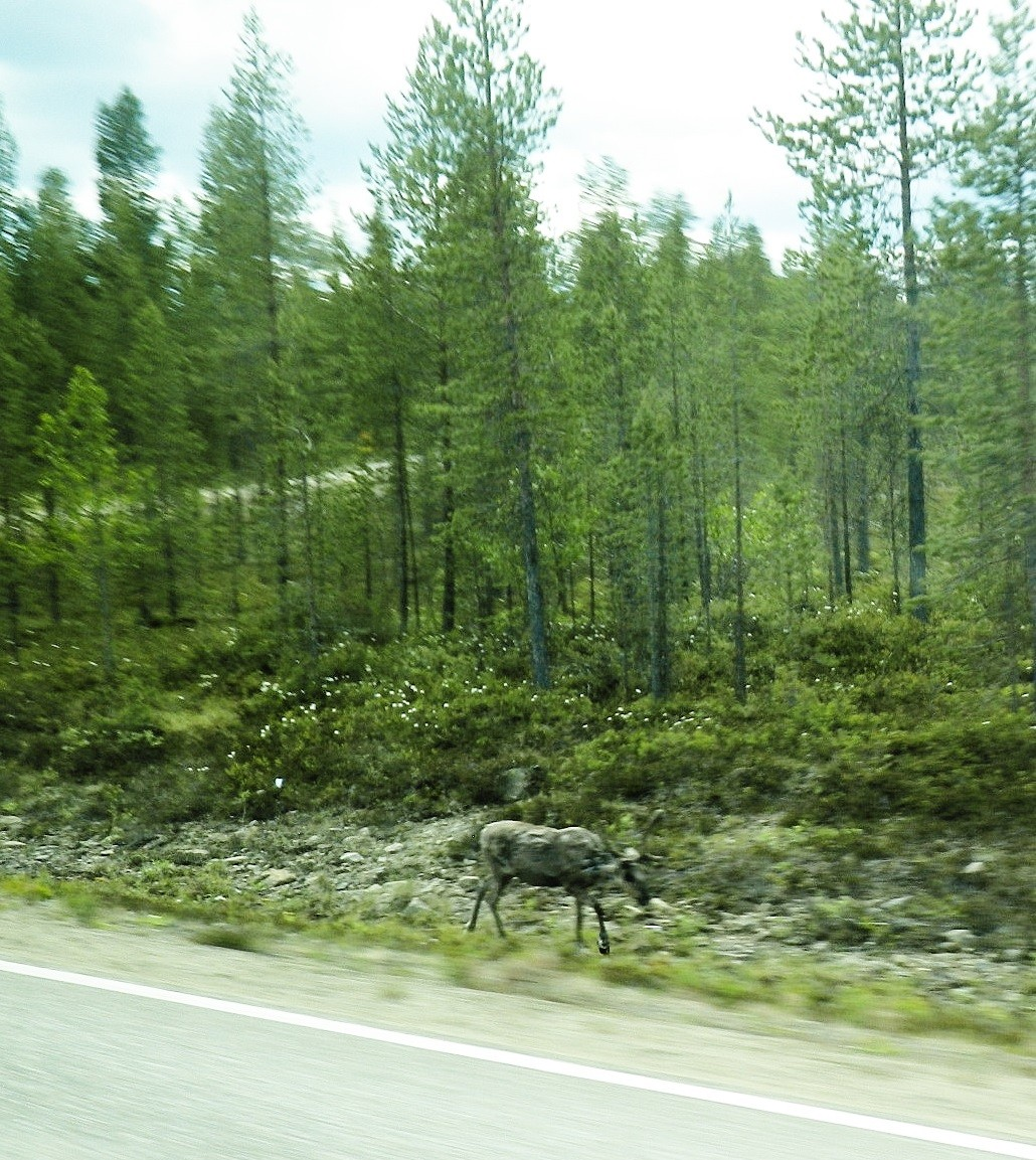 フィンランド・イナリで過ごす白夜と大自然、おすすめの過ごし方特集!オーロラだけじゃない感動の絶景