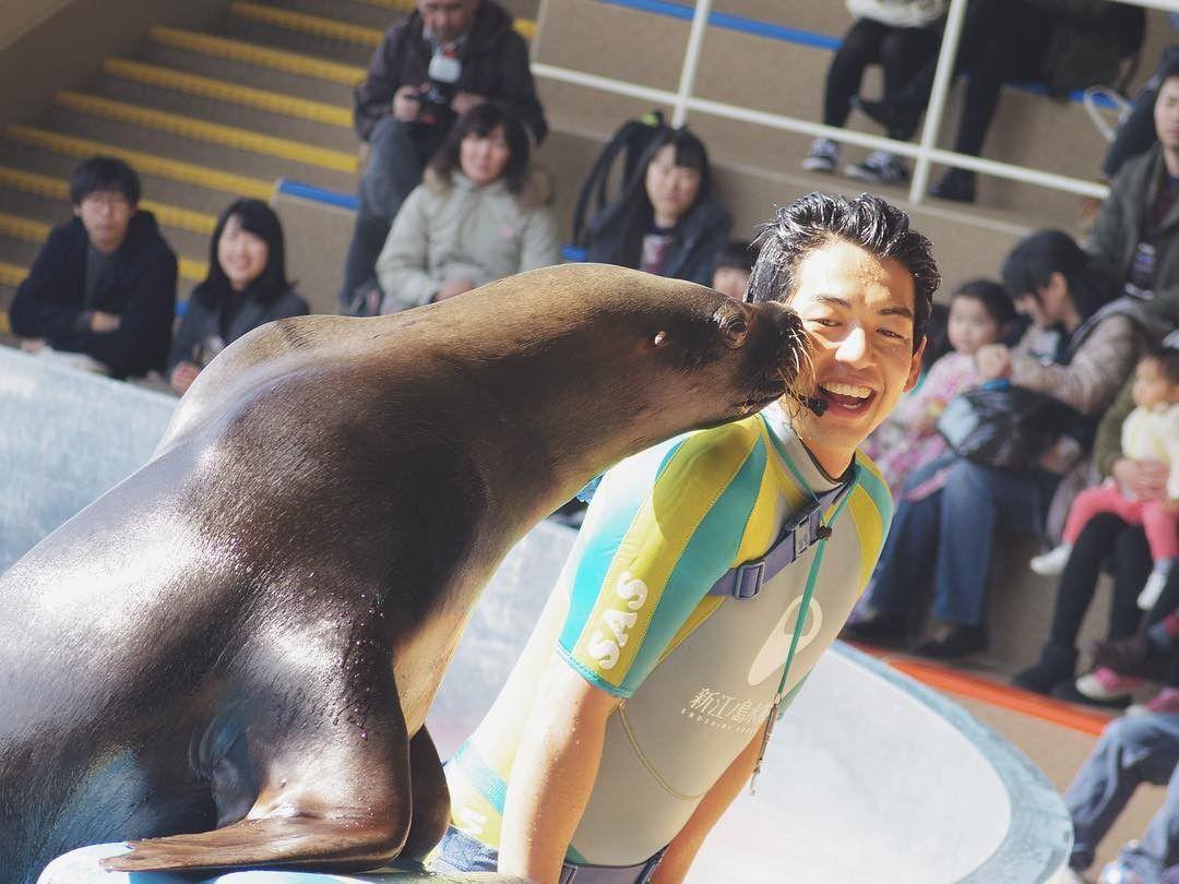 新江ノ島水族館の見どころ&魅力とは?イルカショーがすごすぎる!