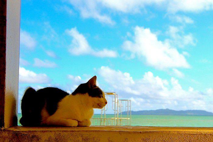 沢山の猫たちに会える♪ 竹富島「コンドイビーチ」へ行こう!