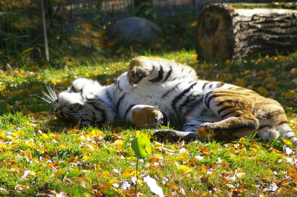 カルガリー人気観光地おすすめ5選!動物園や買い物スポットも!