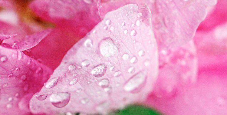 トルコのお土産におすすめ!薔薇の香りが素敵なトルココスメ「ダマスクローズ」とは?