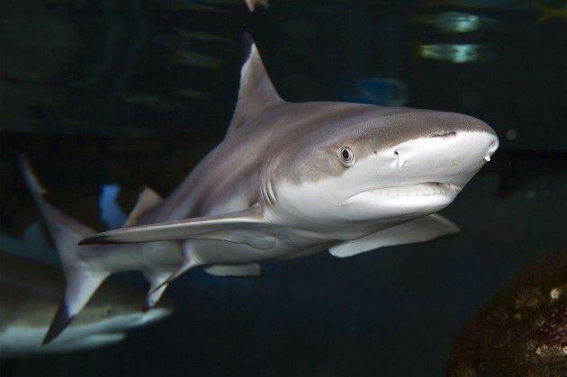 【モナコ】海上の水族館Temple de la Mer!フランス・ニースから週末旅行!