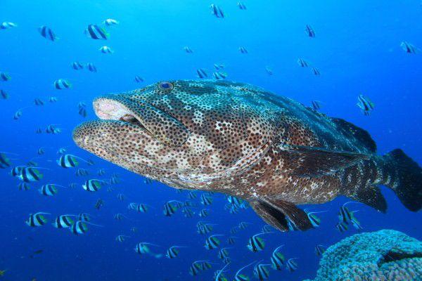 ニューカレドニアの人気ダイビングスポット7選! ヌメアの海にチャレンジ