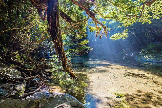 鹿児島の世界自然遺産「屋久島」の過ごし方!屋久杉だけじゃない全魅力まとめ