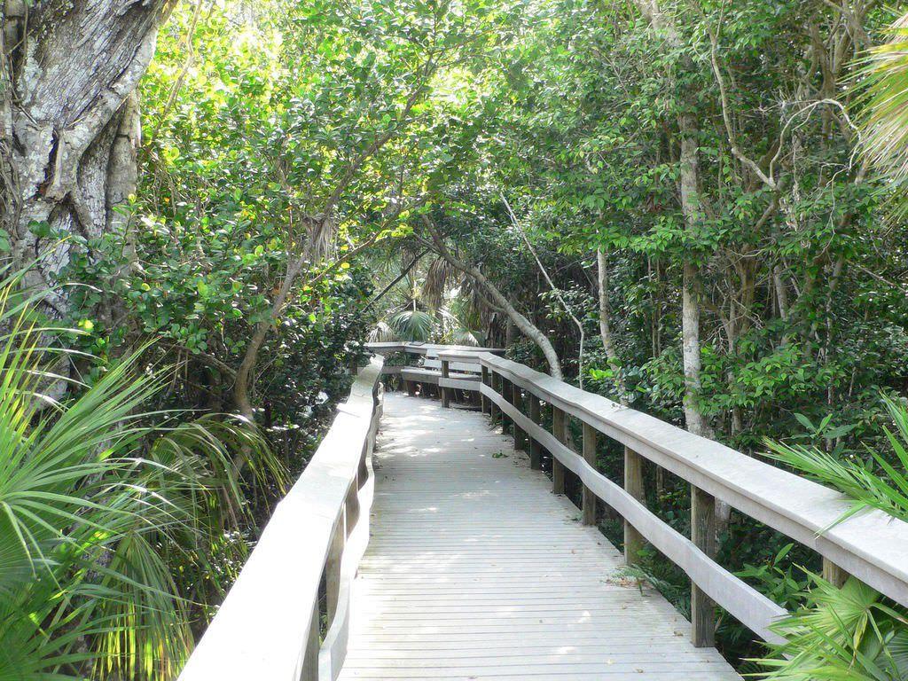 アメリカ・エバーグレーズ国立公園ガイドブック!湿原の動植物とネイチャートレイル