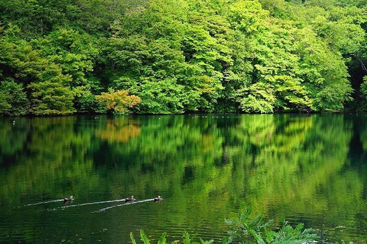 【青森県】知られざる白神山地の幻想的な世界