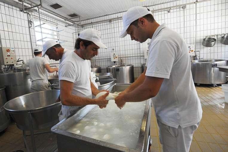 イタリア・カンパニア州のモッツァレラ工場「ヴァンヌーロ」で出来立てを試食してお土産もゲット!