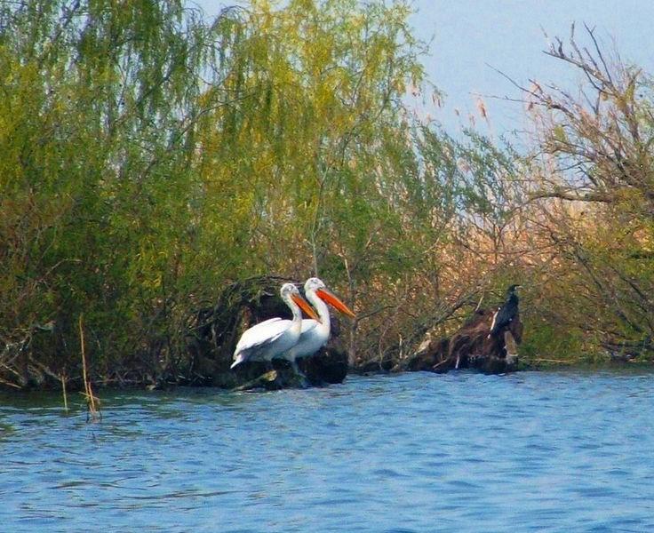 ルーマニアの世界遺産ドナウ・デルタ!ドナウ川は素晴らしい野鳥の楽園