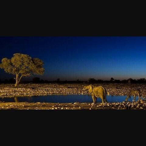 ワイルドすぎ!アフリカで動物がホテルに来ちゃうサファリホテル3選
