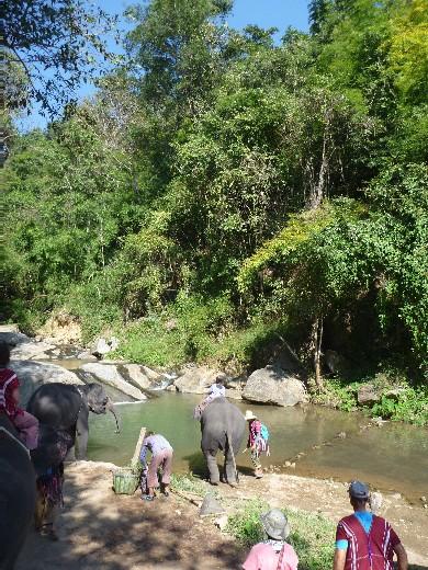 【タイ・チェンマイ】パタラ エレファントファームでアジア象と触れ合う旅を!