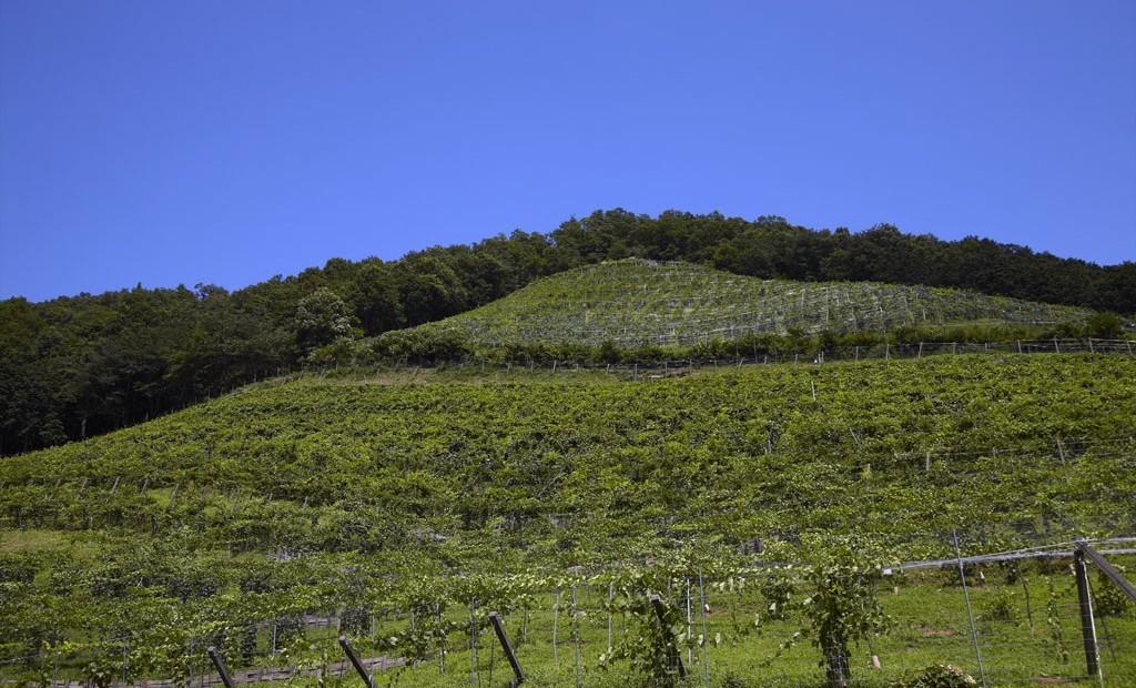 栃木県足利市ココ・ファーム・ワイナリー特集!今、世界中から大注目の国産ワイン生産地にレッツゴー