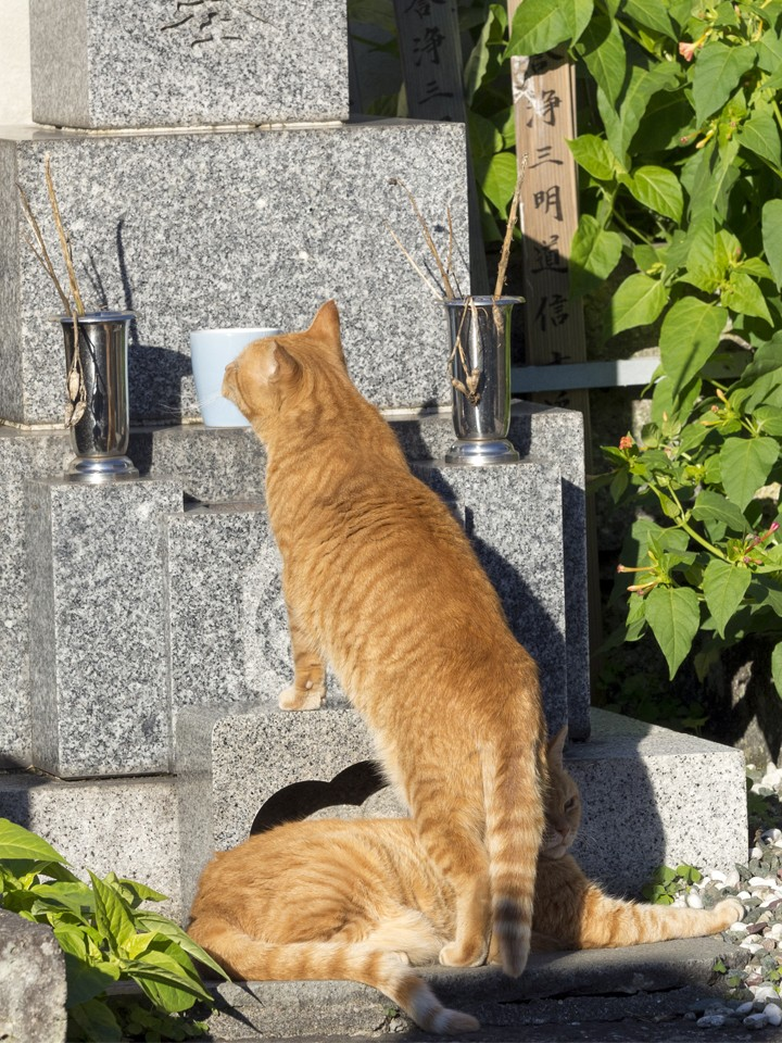 光明寺の猫を見に行こう!鎌倉にある猫寺スポットを楽しむ!